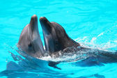 Dolphins swim in the blue water of the pool — Foto Stock