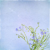 Vintage old postcard with blue flowers of flax — Stock Photo