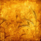 Vintage background wheat ears — Stock Photo