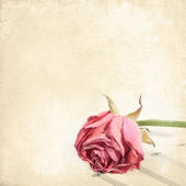 Wilted rose flower on the music paper. Vintage floral background — Stock Photo