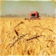 Vintage background wheat harvest  — Zdjęcie stockowe