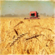 Постер, плакат: Vintage background wheat harvest