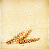 Spikelets of wheat on the vintage textured paper background — Stock Photo