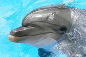 One smiling dolphin — Stock Photo