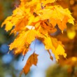 Bright colors of the autumn leaves, bokeh — Stock Photo