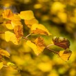 Bright colors of the autumn leaves — Stock Photo