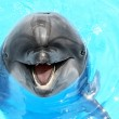 Glad beautiful dolphin smiling in a blue swimming pool water on — Stock Photo #46401743