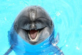 Glad beautiful dolphin smiling in a blue swimming pool water on  — Foto Stock