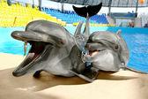 Cieszę się, że delfin piękny uśmiech i czeka mączka rybna na obręczy — Zdjęcie stockowe