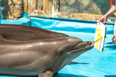 Glad beautiful dolphin in blue water in the swimming pool on a b — Foto Stock