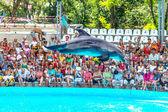 ODESSA, UKRAINE - JUNE 10, 2013: Dolphins on creative entertaini — Stock Photo