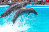 ODESSA, UKRAINE - JUNE 10, 2013: Dolphins on creative entertaini — Stock Photo