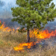 Severe drought. Forest fires in the dry wind completely destroy the forest and steppe. Disaster for Ukraine brings regular damage to nature and the region's economy. — Stock Photo #48123775