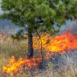Severe drought. Forest fires in the dry wind completely destroy the forest and steppe. Disaster for Ukraine brings regular damage to nature and the region's economy. — Stock Photo