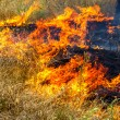 Severe drought. Forest fires in the dry wind completely destroy the forest and steppe. Disaster for Ukraine brings regular damage to nature and the region's economy. — Stock Photo #48123925