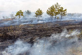 Forest fires and wind dry completely destroy the forest and step — Stock Photo