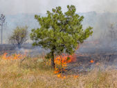 Severe drought. Forest fires in the dry wind completely destroy the forest and steppe. Disaster for Ukraine brings regular damage to nature and the region's economy. — Stockfoto