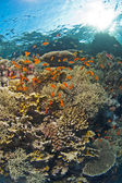 Tropical coral reef scene — Stock Photo