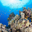 Tropical coral reef scene — Stock Photo #13278799