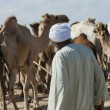 Bedouin trader at an african camel market — Stock Photo #15804705