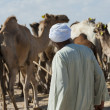 Bedouin trader at an african camel market — Stock Photo
