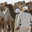 Stock Photo: Two bedouin traders at an african camel market