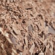 Stock Photo: Closeup of chocolate flakes