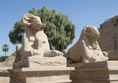 Ram esfinges en el templo de karnak — Foto de Stock