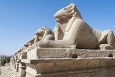 Sphinx de la ram au temple de karnak — Photo