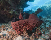 Prickly tube sponge on a sandy seabed — Stock Photo