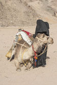 Old bedouin woman with camel in the desert — Stock Photo
