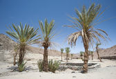 Oasis with palm trees in an isolated desert valley — Stock Photo