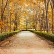 Pathway in autumn Landscape - Stock Photo