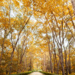 Pathway in autumn Vertical - Stock Photo