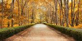 Traject in herfst landschap — Stockfoto