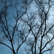 Full Silhouette Dry tree - Foto Stock