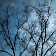Full Silhouette Dry tree Horizontal - Foto Stock