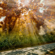 Sun ray light at Autumn forest - Stock Photo