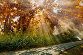 Sun ray light at Autumn forest — Stock Photo