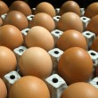Many eggs in paper tray - Foto de Stock