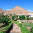 Stock Photo: Garden of resort in egypt