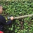 Stock Photo: Trim hedge