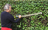 Trim the hedge — Stock Photo
