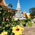Pagoda — Stock Photo #36554651