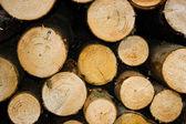 Chopped wood. — Stock Photo