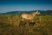 马在牧场上. — 图库照片