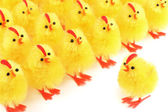 Easter chicks, white background — Stock Photo