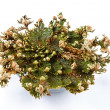 Rose of Jericho (Selaginella lepidophylla), False Rose of Jericho, other common names include Jericho rose, resurrection moss, dinosaur plant, siempre viva, stone flower, doradilla, Resurrection plant — Stock Photo #42721043