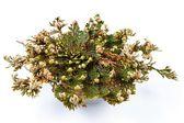 Rose of Jericho (Selaginella lepidophylla), False Rose of Jericho, other common names include Jericho rose, resurrection moss, dinosaur plant, siempre viva, stone flower, doradilla, Resurrection plant — Stock Photo