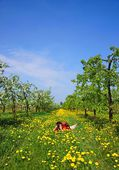 Orchard, female photographer, blooming apple trees, spring — Stock Photo